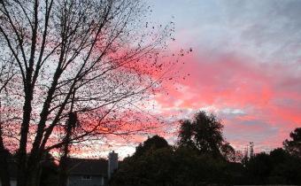 pink sky - Copy
