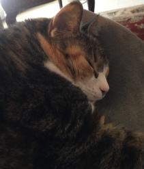 Chloe skeeping